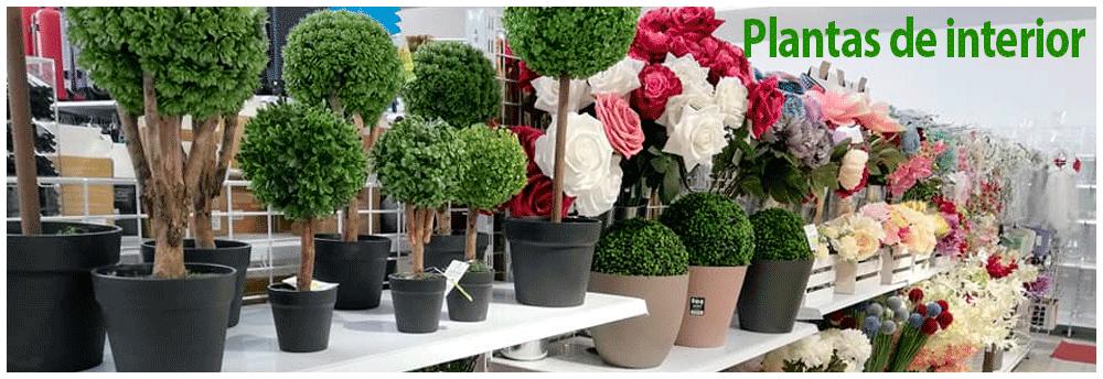 mb - plantas de interior
